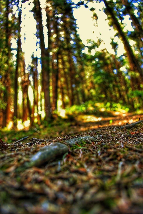 Έδαφος του Forrest στοκ φωτογραφία με δικαίωμα ελεύθερης χρήσης