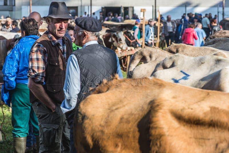 Έκθεση και διαγωνισμός βοοειδών στην κοιλάδα Brembana, Serina, Μπέργκαμο, Lombardia Ιταλία breding στοκ εικόνες