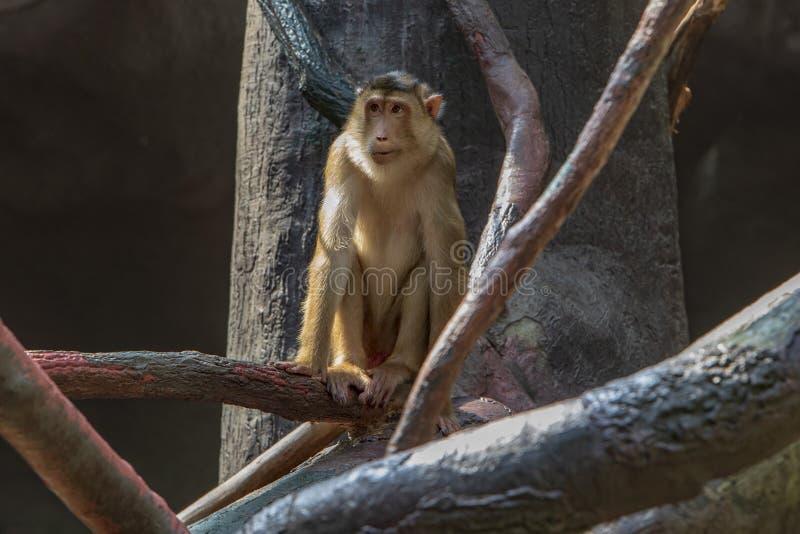 Έκθεση του ζωολογικού κήπου της Πράγας, όπου οι πίθηκοι μπορούν να δουν στοκ φωτογραφίες