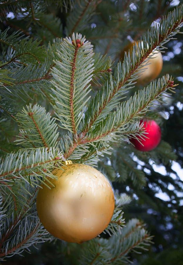 έλατο Χριστουγέννων κλάδ&o στοκ εικόνες
