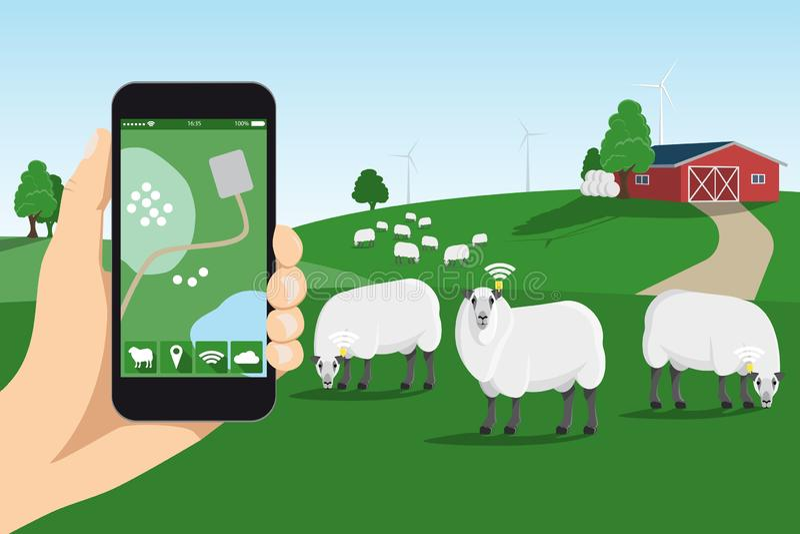 Έλεγχος καταδίωξης προβάτων στο έξυπνο αγρόκτημα ελεύθερη απεικόνιση δικαιώματος