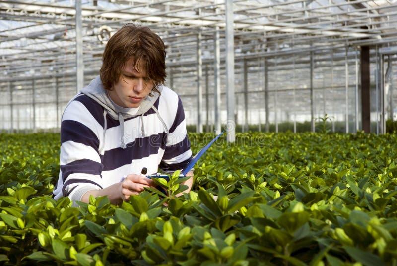 Download Έλεγχος των φυτών στοκ εικόνα. εικόνα από ικεσία, καλύψεις - 13188873