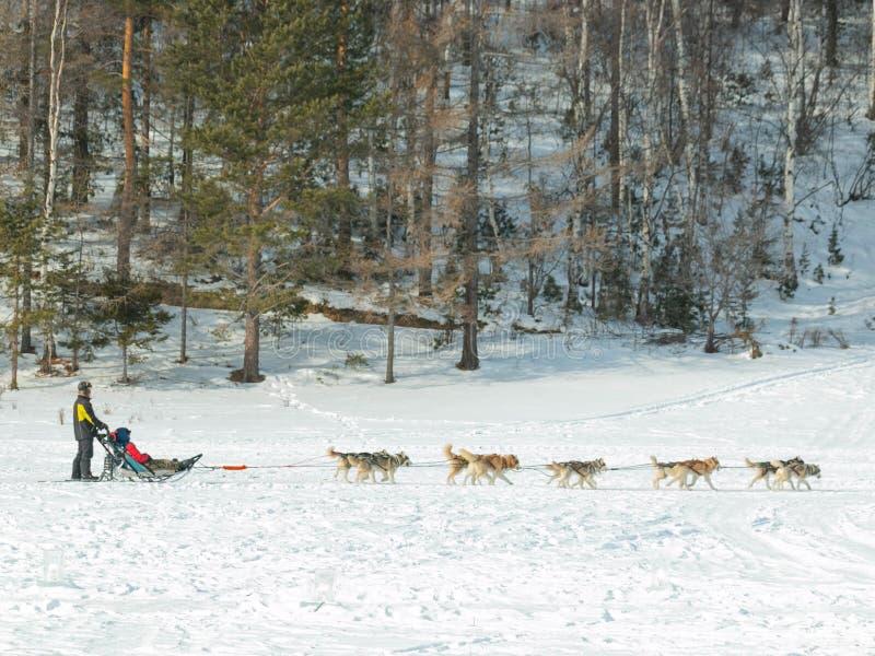 Έλκηθρο σκυλιών για τους τουρίστες στο χωριό Listvyanka στη Ρωσία στοκ εικόνα