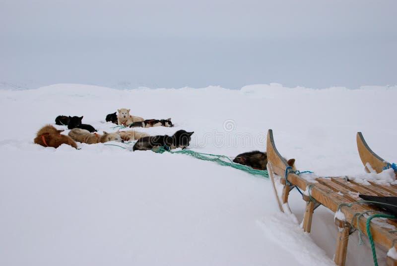 έλκηθρο σκυλιών στοκ φωτογραφία