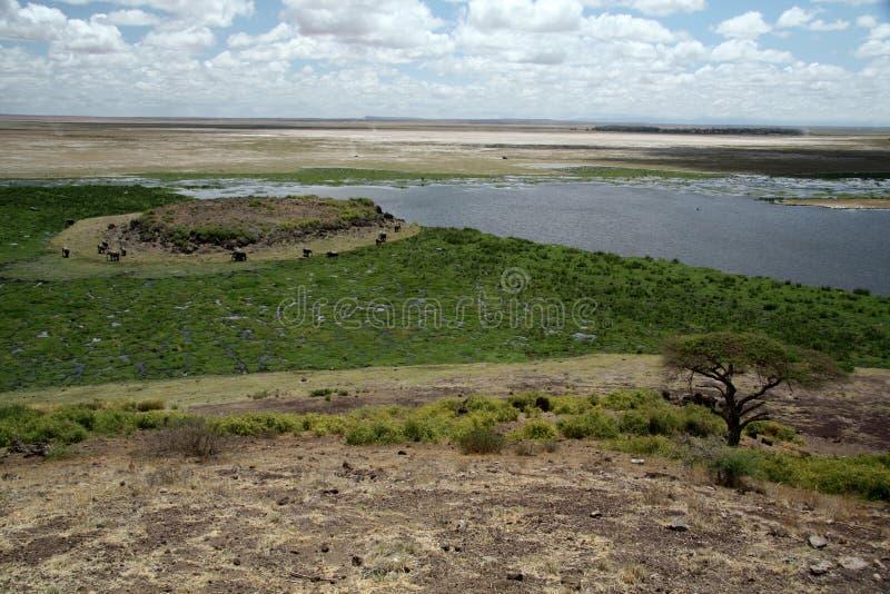 Έλος Amboseli στοκ εικόνες