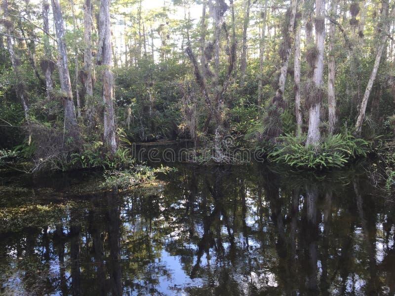 Έλος Everglade στοκ εικόνες