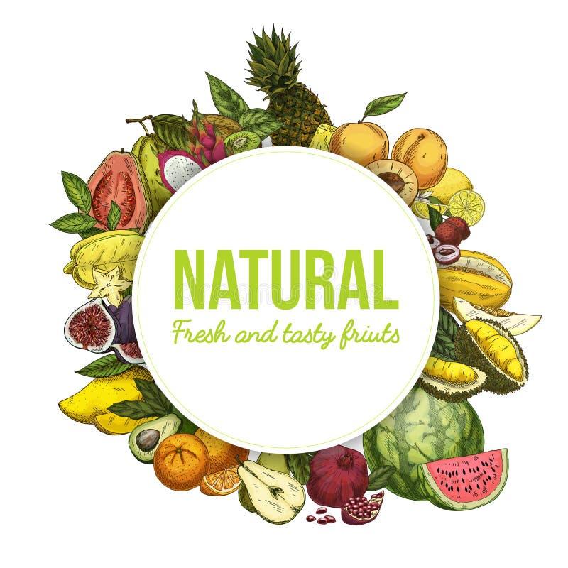 Έμβλημα ή φυλλάδιο με τα εξωτικά τροπικά φρούτα διανυσματική απεικόνιση