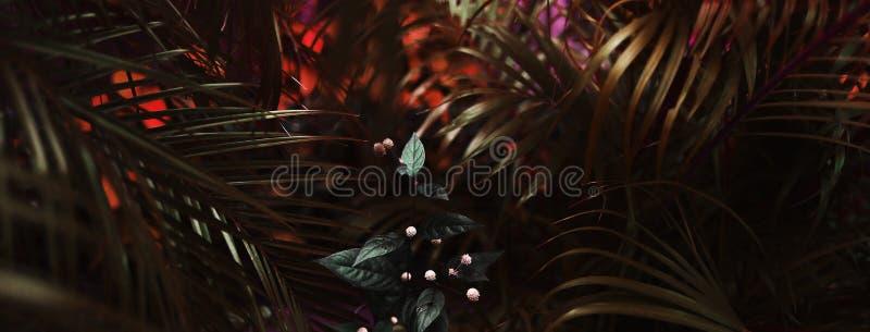 Έμβλημα ιστοχώρου του τροπικών φυλλώματος και των λουλουδιών φοινικών για το υπόβαθρο στοκ φωτογραφία με δικαίωμα ελεύθερης χρήσης
