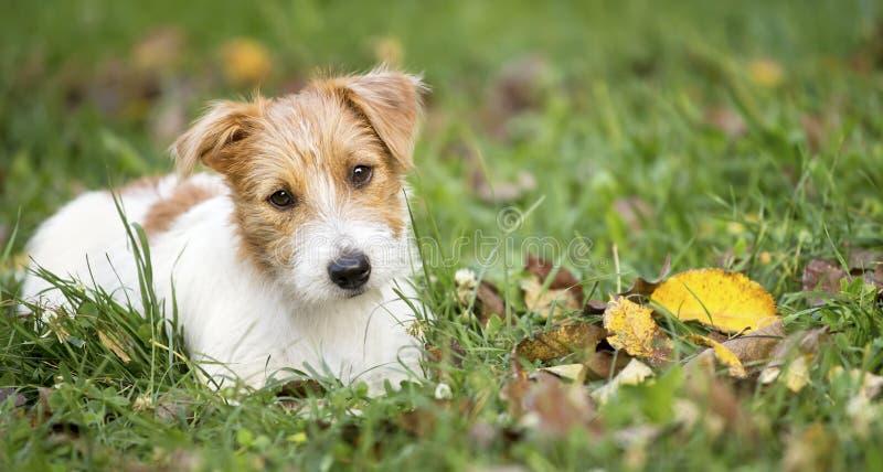 Έμβλημα Ιστού ενός χαριτωμένου ευτυχούς κουταβιού σκυλιών κατοικίδιων ζώων στοκ φωτογραφίες