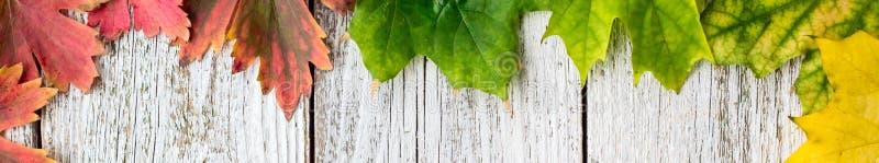 Έμβλημα του εποχιακού πλαισίου των φθινοπωρινών φύλλων σφενδάμου με το χρώμα κλίσης στο άσπρο ξύλινο υπόβαθρο στοκ φωτογραφία με δικαίωμα ελεύθερης χρήσης