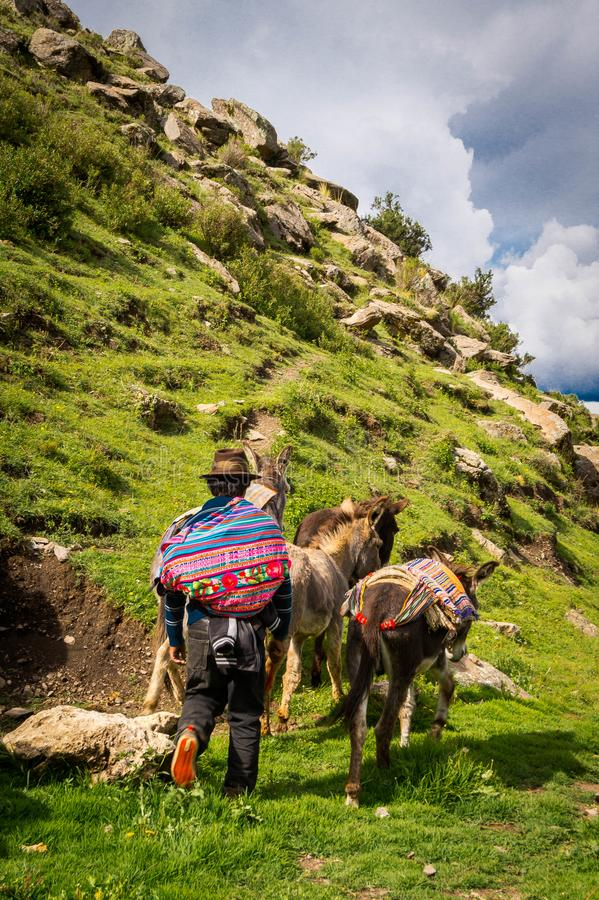 Ένας αγρότης με τα ζώα της που περπατά μέσω της επαρχίας στοκ εικόνες