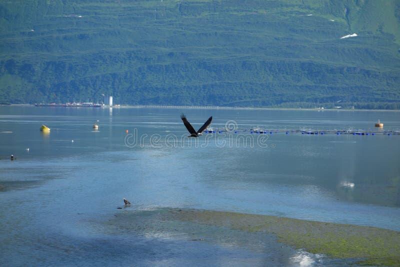 Ένας αετός που τρέπεται σε φυγή στο valdez, Αλάσκα στοκ φωτογραφία με δικαίωμα ελεύθερης χρήσης