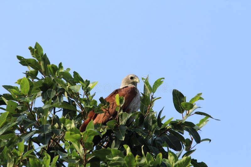 Ένας αετός το έκανε στο πεδίο μάχης και την αναμονή στοκ φωτογραφία με δικαίωμα ελεύθερης χρήσης