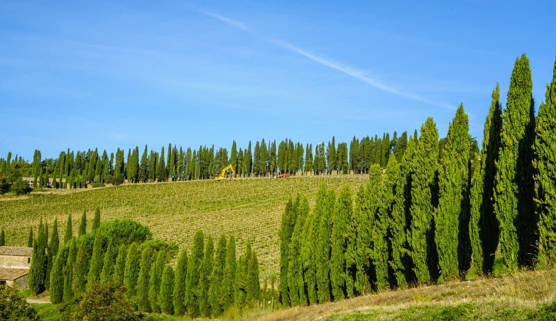 Ένας αμπελώνας που οριοθετείται Ιταλία από το κυπαρίσσι στην Τοσκάνη, στοκ εικόνα