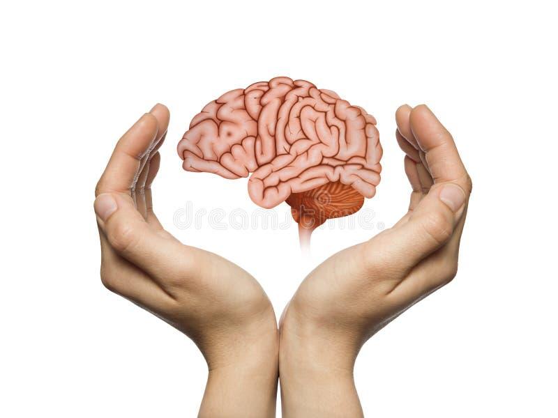 Προστασία εγκεφάλου και έννοια πνευματικών δικαιωμάτων διανυσματική απεικόνιση