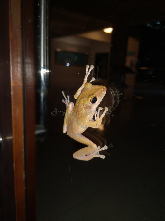 Ένας βάτραχος που σέρνεται σε μια γυάλινη πόρτα στοκ φωτογραφίες