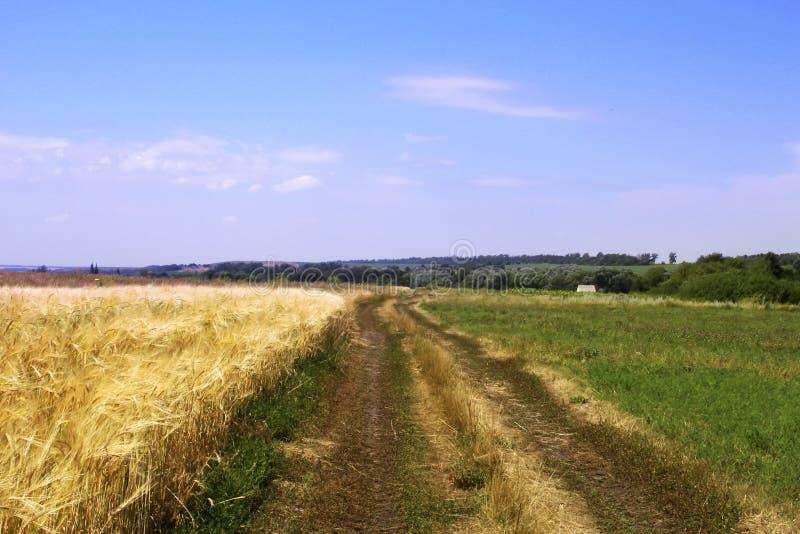 Ένας βρώμικος δρόμος μεταξύ του τομέα σίτου και της πράσινης χλόης στοκ φωτογραφία με δικαίωμα ελεύθερης χρήσης