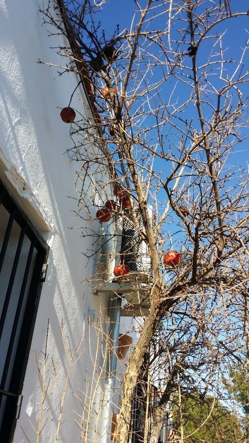 Ένας γρανάτης στο δέντρο στοκ φωτογραφία