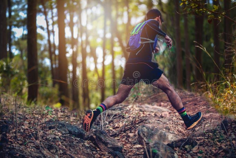Ένας δρομέας ατόμων του ίχνους και πόδια του αθλητή που φορούν τα αθλητικά παπούτσια για το ίχνος που τρέχει στο δάσος στοκ φωτογραφία με δικαίωμα ελεύθερης χρήσης