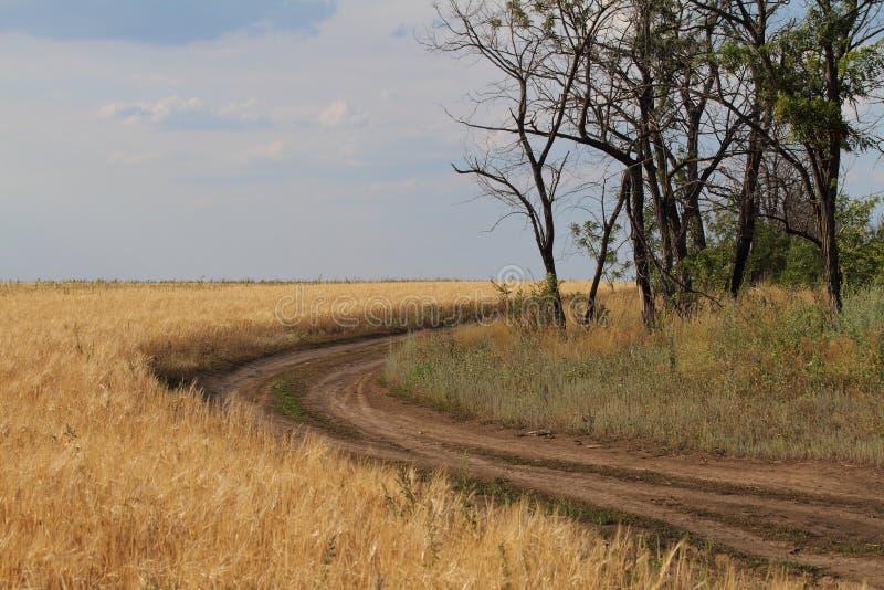 Ένας δρόμος κατά μήκος του πεδίου στοκ εικόνες με δικαίωμα ελεύθερης χρήσης
