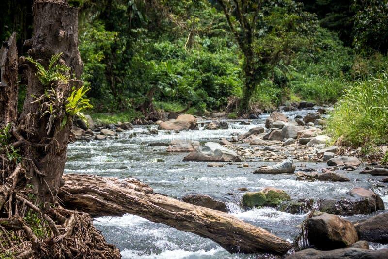 Ένας ειρηνικός ποταμός στη Παπούα Νέα Γουϊνέα στοκ εικόνες με δικαίωμα ελεύθερης χρήσης