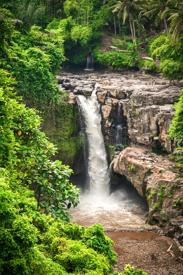 Ένας εξωτικός, καταρράκτης τοπίων που κρύβεται στην τροπική βροχή FO ζουγκλών στοκ εικόνα με δικαίωμα ελεύθερης χρήσης
