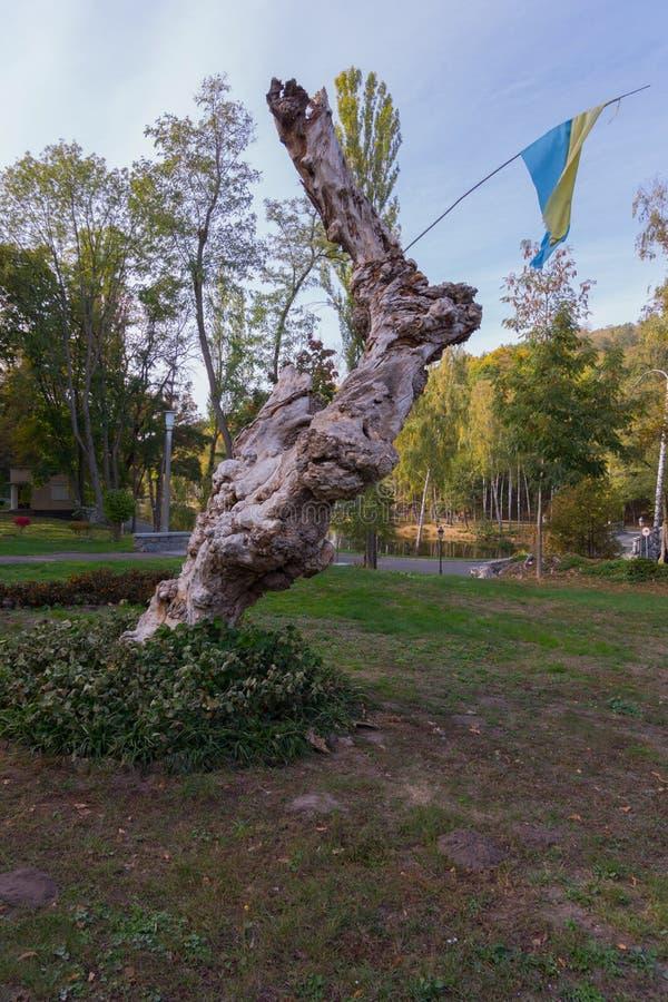 Ένας εξωτικός κορμός ενός παλαιού δέντρου με τις αποφύσεις με μια σημαία σε το που αυξάνεται μεταξύ των πράσινων εγκαταστάσεων σε στοκ φωτογραφία με δικαίωμα ελεύθερης χρήσης