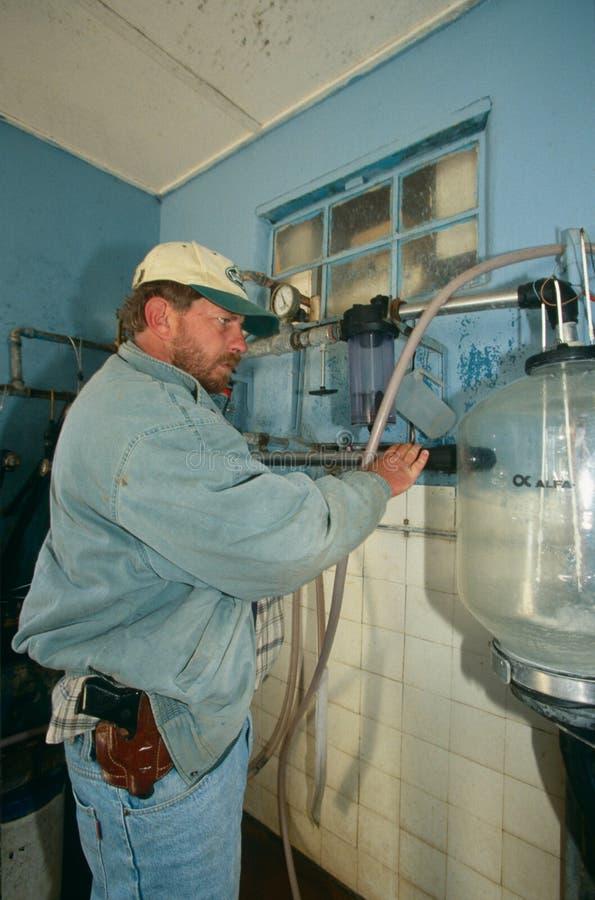 Ένας λευκός αγρότης σε ένα γαλακτοκομικό αγρόκτημα, Νότια Αφρική στοκ εικόνες με δικαίωμα ελεύθερης χρήσης