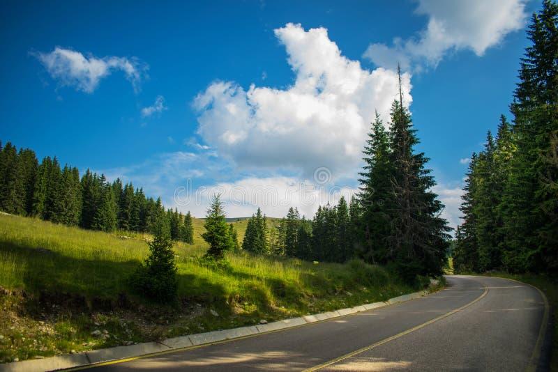 Ένας θαυμάσιος δρόμος βουνών Ένα όμορφο τοπίο με τα μέρη της πρασινάδας, ψηλά πεύκα στην πλευρά του δρόμου και ένας μπλε ουρανός  στοκ εικόνα με δικαίωμα ελεύθερης χρήσης