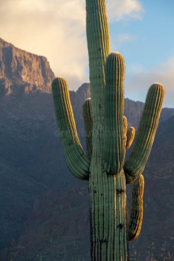 Ένας κάκτος Saguaro στο τοπίο ερήμων στοκ εικόνες