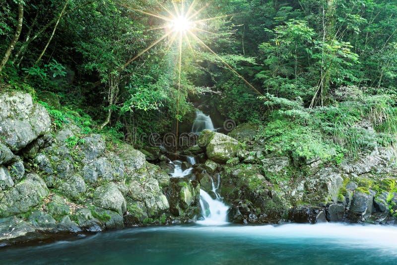 Ένας καλός καταρράκτης που διατρέχει σε ένα ρεύμα σε ένα μυστήριο δάσος με το φως του ήλιου που λάμπει της πολύβλαστης πρασινάδας στοκ φωτογραφία με δικαίωμα ελεύθερης χρήσης