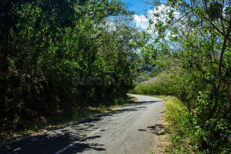 Ένας κενός δρόμος σε μια ηλιόλουστη ημέρα χωρίς το ένα που αφήνεται Ακριβώς δέντρο, ο Μπους και σύννεφα στοκ φωτογραφία