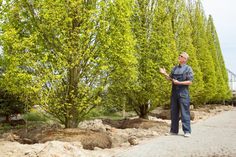 Ένας κηπουρός στις φόρμες εξετάζει τα αγορασμένα δέντρα στο κατάστημα κήπων στοκ φωτογραφίες