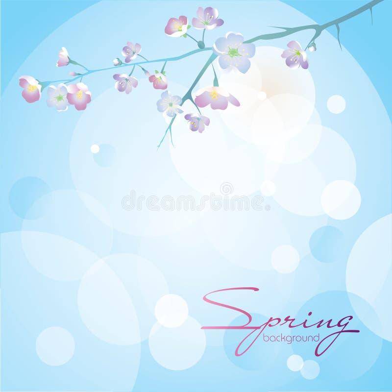 Ένας κλάδος του κερασιού ανθίζει σε ένα μπλε με ένα άσπρο υπόβαθρο ελεύθερη απεικόνιση δικαιώματος
