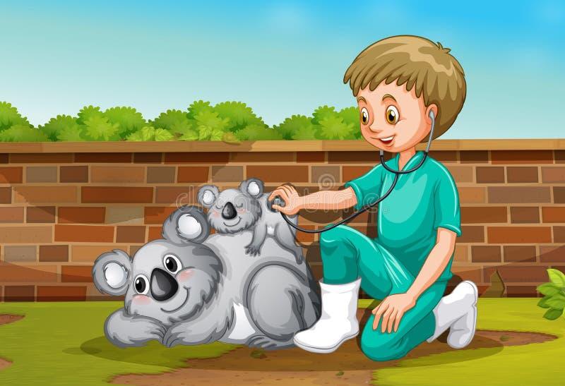 Ένας κτηνίατρος που φροντίζει Coala ελεύθερη απεικόνιση δικαιώματος