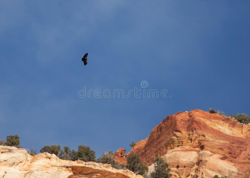 Ένας κόνδορας Καλιφόρνιας που περιβάλλει επάνω από τους απότομους βράχους κόκκινου ψαμμίτη του εθνικών μπλε ουρανού και των σύννε στοκ εικόνα με δικαίωμα ελεύθερης χρήσης