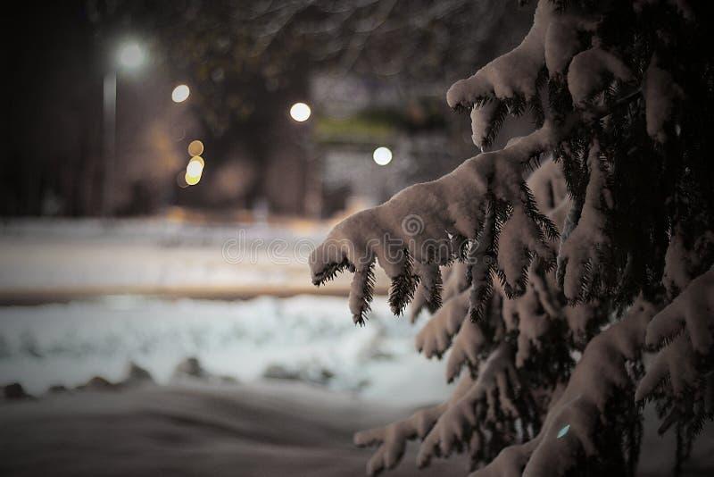Ένας κλάδος των ερυθρελατών κάτω από το χιόνι τη νύχτα στοκ φωτογραφίες
