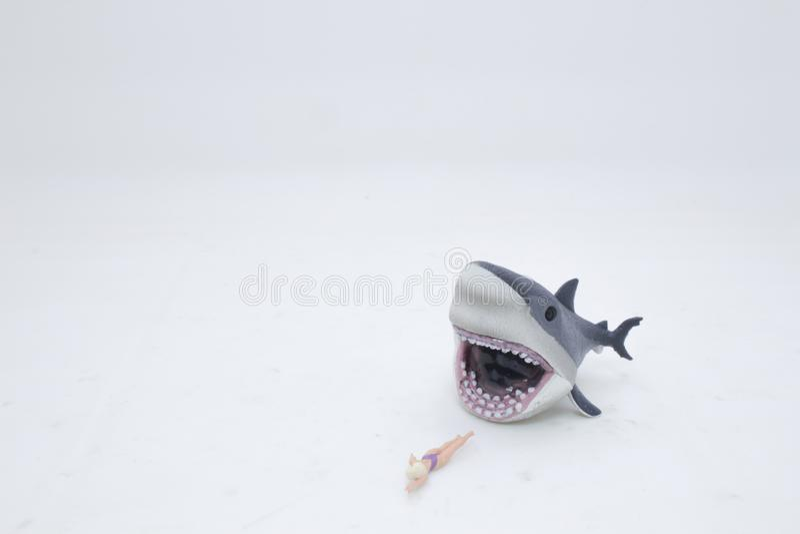 ένας μεγάλος άσπρος καρχαρίας που επιτίθεται σε ένα θηλυκό στοκ φωτογραφία με δικαίωμα ελεύθερης χρήσης