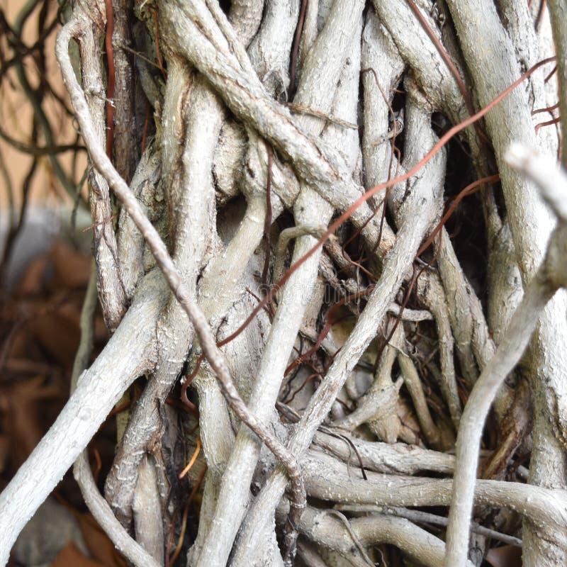 Ένας μεγάλος αριθμός δέσμευσης rootlet ενός δέντρου στοκ φωτογραφίες με δικαίωμα ελεύθερης χρήσης