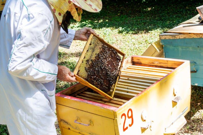 Ένας μελισσοκόμος βγάζει ένα πλαίσιο με τις μέλισσες από μια κυψέλη σε μια ηλιόλουστη καλοκαιρινή ημέρα στοκ φωτογραφίες