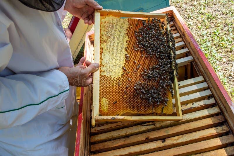 Ένας μελισσοκόμος βγάζει ένα πλαίσιο με τις μέλισσες από μια κυψέλη σε μια ηλιόλουστη καλοκαιρινή ημέρα στοκ φωτογραφία