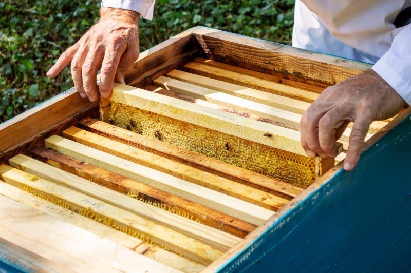 Ένας μελισσοκόμος βγάζει ένα πλαίσιο με τις μέλισσες από μια κυψέλη σε μια ηλιόλουστη καλοκαιρινή ημέρα στοκ φωτογραφία με δικαίωμα ελεύθερης χρήσης