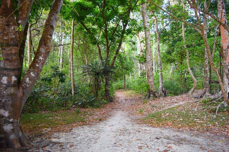 Ένας μη λιθοστρωμένος βρώμικος δρόμος μέσω του πράσινου δάσους με τα ψηλά δέντρα γύρω - ένας περίπατος στην πράσινη γη - περιβάλλ στοκ φωτογραφίες