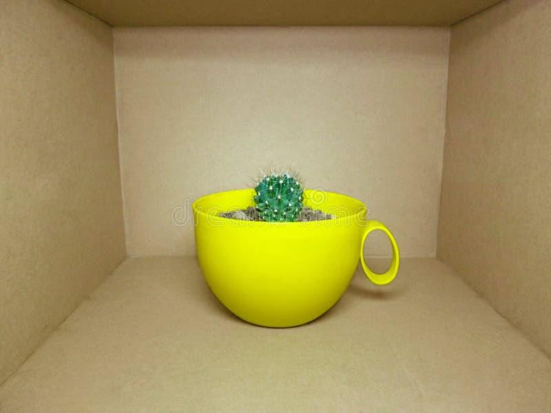 Ένας μικρός globular κάκτος σε ένα φωτεινό κίτρινο δοχείο είναι μέσα σε ένα καφετί ορθογώνιο κιβώτιο στοκ εικόνα