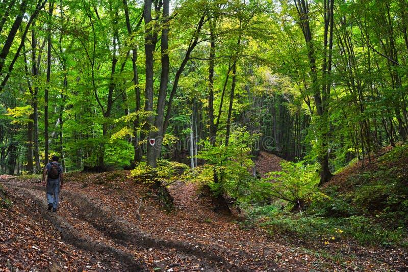 Ένας μοναχικός πεζοπόρος σε ένα υπέροχο δάσος στοκ εικόνα