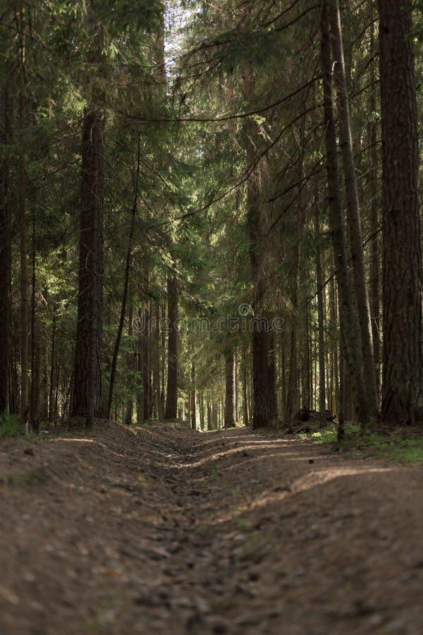 Ένας μυστήριος τρόπος στο θερινό πυκνό μαγικό δάσος στοκ εικόνα με δικαίωμα ελεύθερης χρήσης