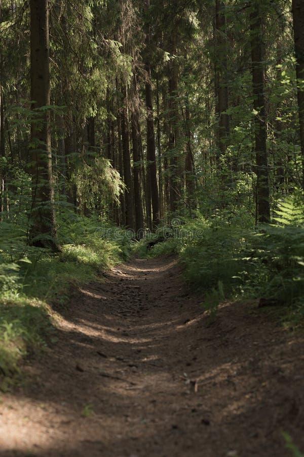 Ένας μυστήριος τρόπος στο θερινό πυκνό μαγικό δάσος στοκ φωτογραφία
