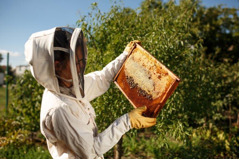 Ένας νέος θηλυκός μελισσοκόμος σε ένα επαγγελματικό κοστούμι μελισσοκόμων, επιθεωρεί ένα ξύλινο πλαίσιο με τις κηρήθρες που κρατά στοκ φωτογραφία
