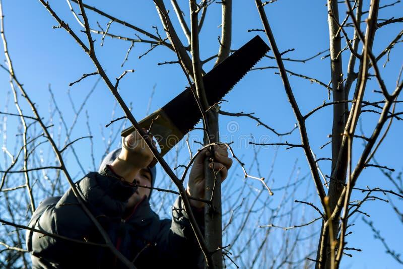 Ένας νεαρός άνδρας που κάνει την περικοπή άνοιξη του δέντρου διακλαδίζεται μια ηλιόλουστη ημέρα στοκ εικόνες με δικαίωμα ελεύθερης χρήσης