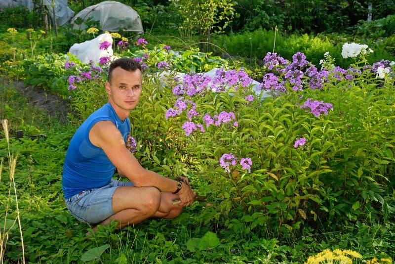 Ένας νεαρός άνδρας για το Μπους Phlox στην πλοκή το καλοκαίρι σε ένα Sunn στοκ εικόνες με δικαίωμα ελεύθερης χρήσης